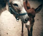 Donkey_1