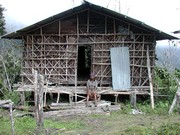 Traditional Arfak House