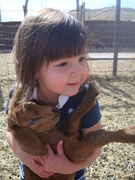 Helping dad with the goats