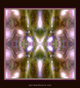 Kaleidoscope photoshop mandala : ms_7_188_700