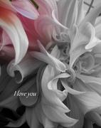 Flores Con Brio