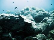 Paros Underwater