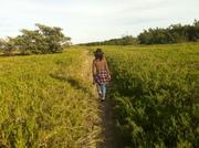 coastal prarie trail