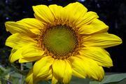 Flowerscritters003