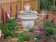 Sim's garden