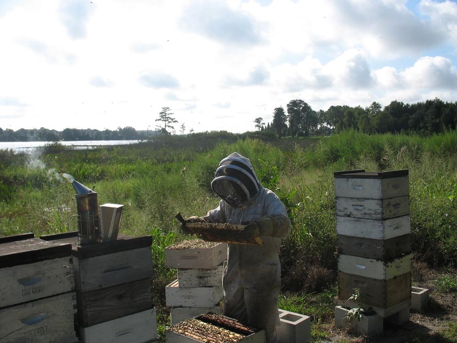 Winter Park Honey Apiary