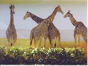 B Youg  giraffe mural 2004