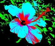 Andy Warhol Hibiscus #2