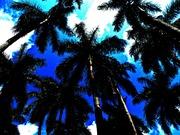 Palm Trees,Study#1
