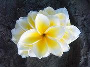 Loris' Aloha