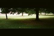 Mature oaks