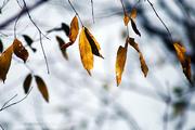 seasons change
