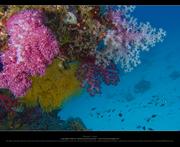 Similan 18-22 Apr 07 Underwater