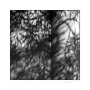 Dimension-of-shadow