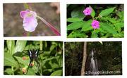 Flora@Maehongson