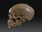 500237_skull_side