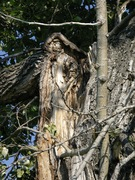 Tree Fairy in Fish Creek