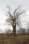 tree fshcrk 002