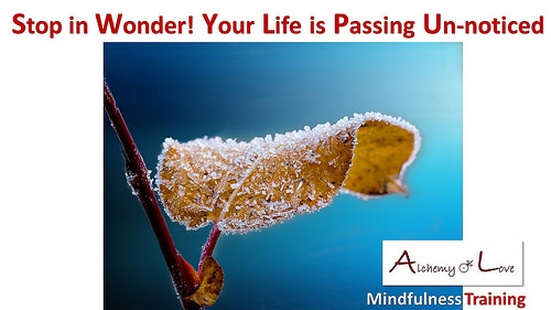 life quote stop in wonder mindfulness training