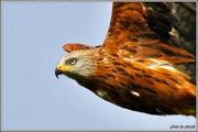 Birds..by Ioannis