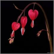Flowers..by Ioannis