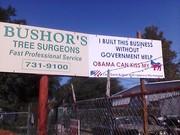 Bushors tree service