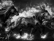 Black-Horse-2700