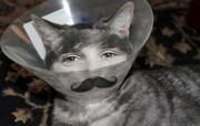 ♫♪   Cat 'Stache Bieber  ♫♪