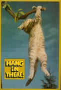 Hang in There! Cat #2,318