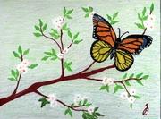 Motýl_2