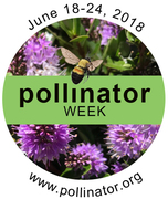 National Pollinator Week!