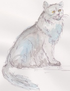 blue cat 001