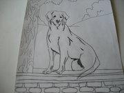 en labrador betriver hund