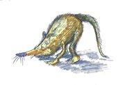 Tierd rat