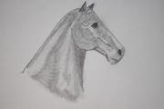 Häst :P