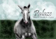 palaze