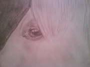 Hästöga