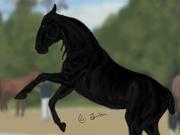 Egenritade hästar