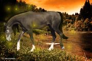 horse manipulations