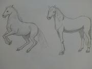 två fina hästar