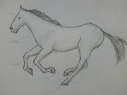 """grunden till """"brun häst"""""""