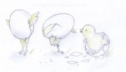 De okläckta kycklingarnas ballet