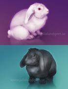 White bunny / Black bunny