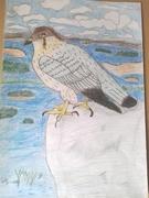 Rovfågel på klippa