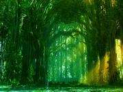 Kouzlo lesa