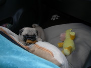 Bella's drive home from airport