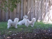 Lucky, Ticker and Pierre at The Fence.