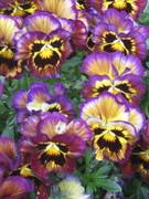 April colour.