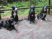 Charlie, Lucky, Ben and proud Lady on 7th b/day.