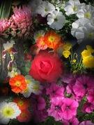 Tes fleurs, Berns.